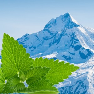 Alpina (10ml)